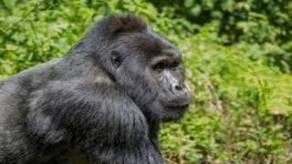 iTSCi les normes protègent les espèces menacées